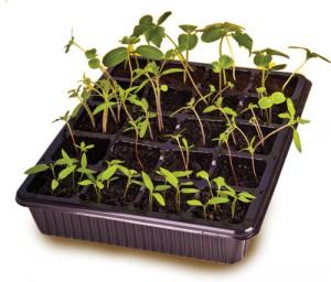 Выращиваем рассаду в минипарнике