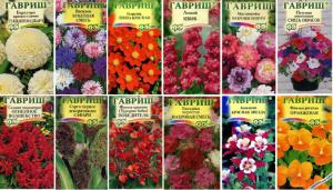 Как купить семена цветов и не разочароваться