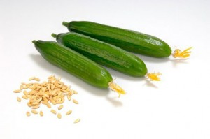 Как купить семена огурцов и не разочароваться