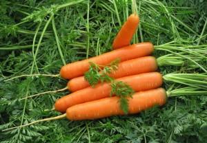 Как купить семена моркови и не разочароваться