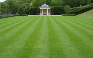 Трава для газона — ландшафт, достойный восхищения!